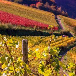 Paysage de vignes en France