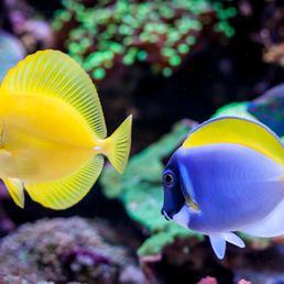 Vannes : Aquarium
